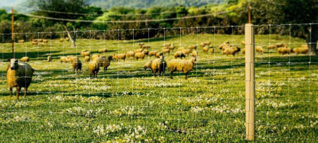 Grillage nou cl ture moutons - Noue en zinc ...